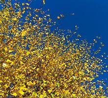 Autumn Blue Sky by DavidHornchurch