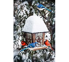 Birds on bird feeder in winter Photographic Print