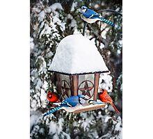 Birds on bird feeder in winter Photographic Print