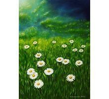 Daisy meadow Photographic Print