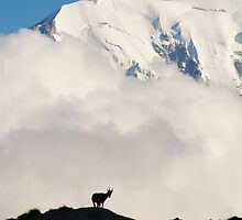 Contemplating Mont Blanc by MIRCEA COSTINA