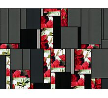 Mixed Color Poinsettias 2 Art Rectangles 7 Photographic Print