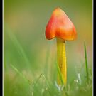 Blackening  Waxcap   [reworked] by relayer51