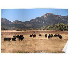 Arizona Cowboy Poster
