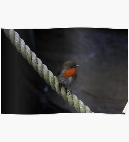 Rocky Robin Poster