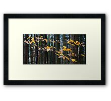 Floating leaves Framed Print