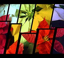 Mixed Color Poinsettias 2 Tinted 2 by Christopher Johnson