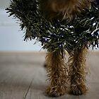 Merrier Terrier by Trish  Anderson
