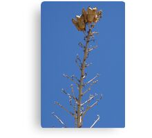 Seed Pods 2 Canvas Print