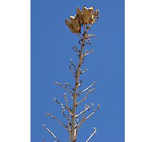 Seed Pods 2 Photographic Print
