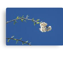 Blossoms and Sky Canvas Print
