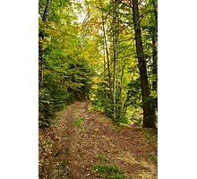 Trail Split in Autumn Photographic Print