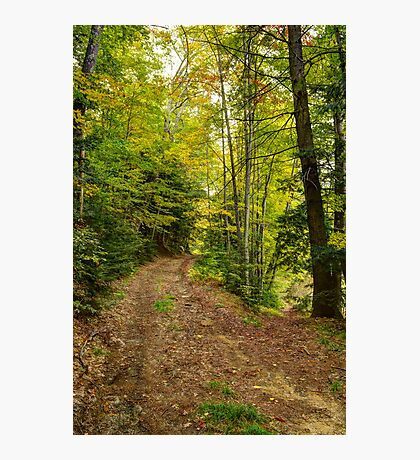 Trail Split in Autumn Photographic Print