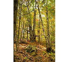 Spec Pond Trail Photographic Print