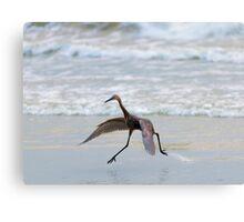 Heron Ballet Canvas Print