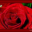 Rose Droplets  by Jamie Cameron