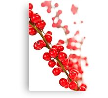 Red Christmas berries Canvas Print