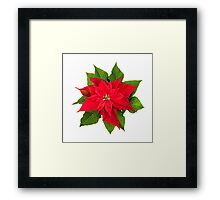 Christmas poinsettia plant on white Framed Print