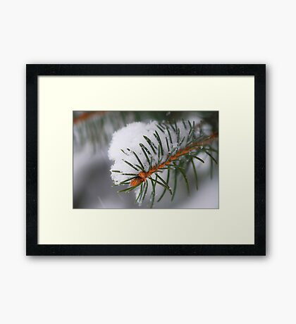 Spruce branch with snow Framed Print