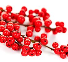 Red Christmas berries by Elena Elisseeva