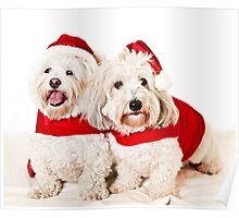 Two cute dogs in santa outfits Poster