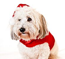 Cute dog in santa outfit by Elena Elisseeva