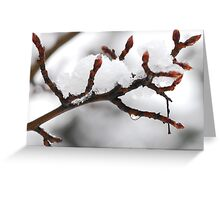 Snow covered branch Greeting Card