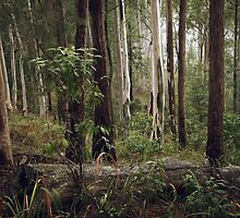 Aussie bush scene on a misty morning by ozzzywoman