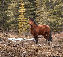 Majestic Stallion by JamesA1