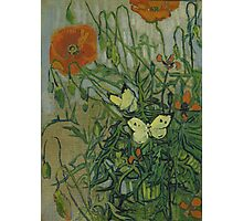 Vincent Van Gogh  - Butterflies and poppies, 1890 Photographic Print