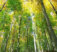 Early autumn in the woods by Brevis