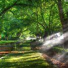 Rosalind Park by Joel Bramley