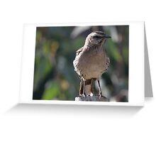 Chilean Mockingbird Greeting Card