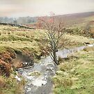 Autumn on Hamer Moor ~ North Yorkshire by patrixpix