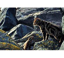 Top Cat Photographic Print
