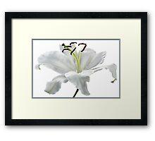 Lily White. Framed Print