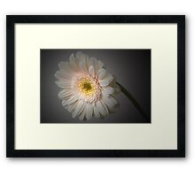 Soft Light. Framed Print