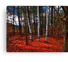 Birches Nestled in Red Canvas Print