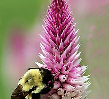 Give Bees a Chance by vette