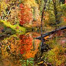 Fairy Tale Autumn by K D Graves Photography