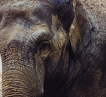 Elephant Portrait by PatiDesigns