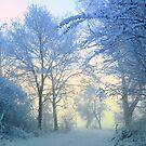 Wonderful Winter Morning by ienemien