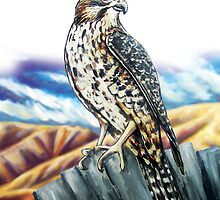 Native NZ Falcon by Ira Mitchell-Kirk