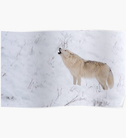 The Howl - Arctic Wolf Poster