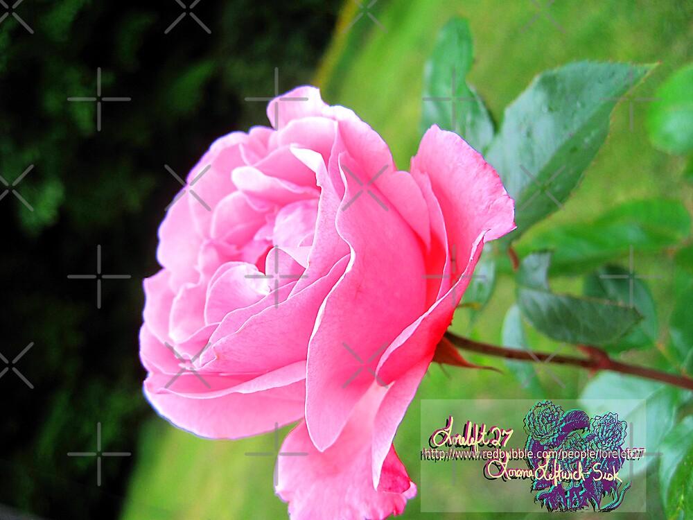 my lovely pink by LoreLeft27