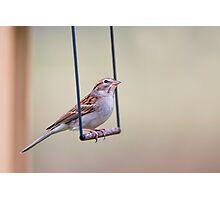 Swinging Sparrow Photographic Print