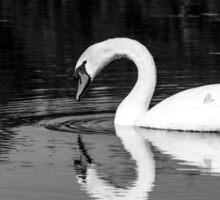 Swan reflection B+W Sticker