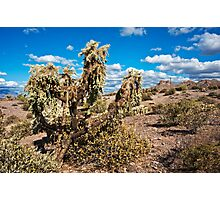 Lost Dutchman Companion Photographic Print