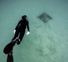 Diver with Bat Ray by Greg Amptman