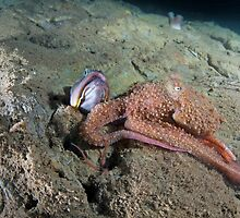 Octopus with a Sarcastic Fringe Head by Greg Amptman